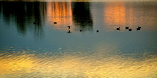 Enten auf dem Wasser Lizenzfreie Stockfotos