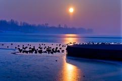 Enten auf einem gefrorenen See Lizenzfreies Stockfoto