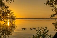 Enten auf einem kleinen See Stockfoto