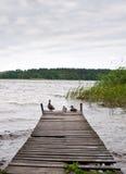 Enten auf Pier Lizenzfreie Stockfotografie