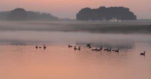 Enten auf Sonnenuntergangsee Lizenzfreie Stockbilder