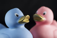 Enten in den Geschlechtsfarben Lizenzfreie Stockbilder