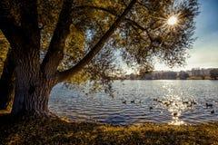 Enten, die in den Sonnenreflexionen schwimmen Stockfotos