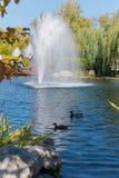 Enten, die in einen Teich auf dem Hintergrund eines schönen Brunnens mit klarem Wasser mit den grünen Weiden wachsen auf schwimme Stockbild