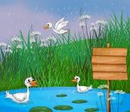 Enten, die im Regen spielen Stockfotos