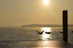 Enten, die südwärts fliegen Lizenzfreie Stockfotografie