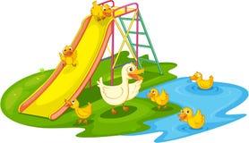 Enten in einem Park Stockbilder