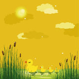 Enten in einem Teich Stockbild