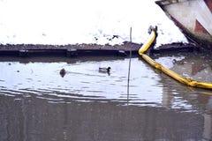 Enten in einem Teich Lizenzfreie Stockfotografie