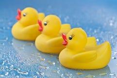 Enten in einer Reihe Lizenzfreies Stockbild