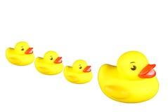 Enten in einer Reihe Stockfoto
