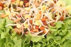 Enten en salade Stock Afbeelding