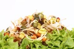 Enten en salade Stock Foto's