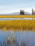 Enten im Yellowstone See Lizenzfreies Stockfoto