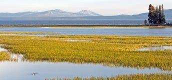 Enten im Yellowstone See Lizenzfreie Stockbilder
