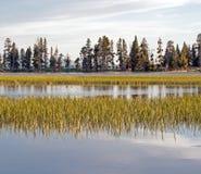 Enten im Yellowstone See Stockfoto