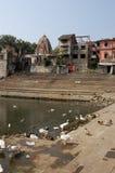 Enten und Gänse, Banganga Becken, Mumbai Lizenzfreie Stockfotos