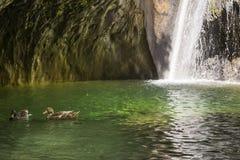 Enten und Wasserfall Stockfoto