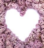 Entendu de l'arbre lilas fleurissant Image stock