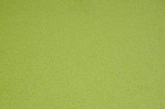 Entengrütze bedeckt im Sumpf Lizenzfreie Stockbilder