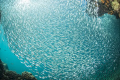 Entering Inside a school of fish underwater Stock Photography