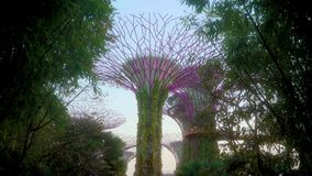 Entering Supertree Grove Gardens by the Bay Singapore
