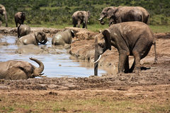 Entering the Waterhole stock photography