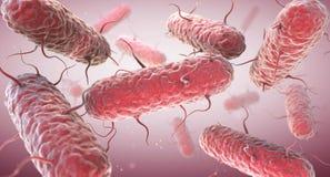 Enterobacteria Os Enterobacteriaceae são uma grande família das bactérias Grama-negativas ilustração stock