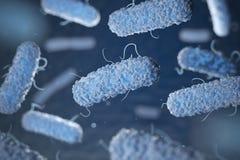Enterobacterias Bacterias gram-negativi Immagine Stock