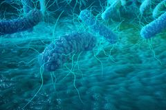 Enterobacterias Gram negativas Proteobacteria, bacteria such as salmonella, escherichia coli, yersinia pestis. Klebsiella. 3D rendering Royalty Free Stock Photo