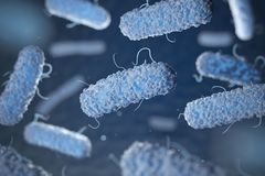 Enterobacterias. Gram-negative bacterias royalty free illustration