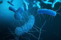 Enterobacterias gramnegativas Proteobacteria, bakterier liksom salmonellan, Escherichia Coli, yersiniapestis stock illustrationer
