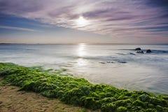 Free Enteromorpha Erosion Coast Stock Image - 42087021