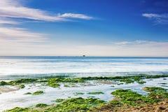 Free Enteromorpha Erosion Coast Royalty Free Stock Photo - 42087125