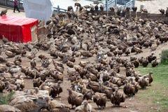 Enterrement de conduite de ciel d'Eagle Photographie stock