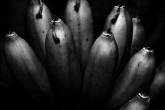 Entertaining bunch of bananas. Tasseled bananas on the tree Royalty Free Stock Photos