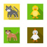 Entertainment, farm, pets and other web icon in flat style. Eggs, toy, recreation icons in set collection. Entertainment, farm, pets and other  icon in flat Royalty Free Stock Photo