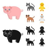 Entertainment, farm, pets and other web icon in cartoon,black style. Eggs, toy, recreation icons in set collection. Entertainment, farm, pets and other icon in royalty free illustration