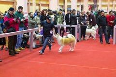 Entery собаки Стоковая Фотография
