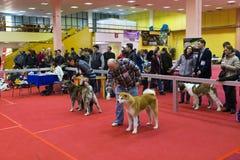 Entery de chien Photos libres de droits