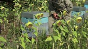 Entfernen des Bienenstockdeckels stock footage