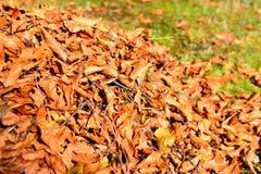 Entfernen von Laub Herbstlaub Stockbild