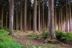 Entfernte Dunkelheit im Wald Lizenzfreies Stockfoto