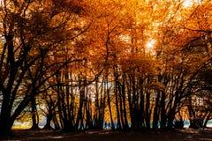 Entfernte Paare, die in orange Wald gehen lizenzfreies stockfoto