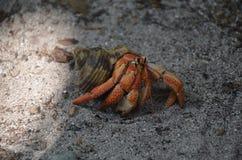 Entgehende Krabbe Stockbild