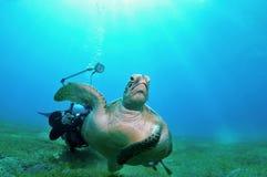 Entgehende Schildkröte lizenzfreie stockfotografie