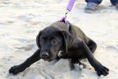 Enthousiast Puppy stock foto's