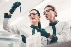 Enthusiastic laboratory assistants with a test tube. Concentration. Portrait of enthusiastic hardworking laboratory assistants holding a test tube and looking at royalty free stock images
