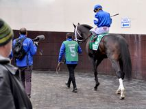 Enticed - Godolphin Stables stock photography