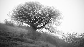 Entlastung eines Baums Stockbild